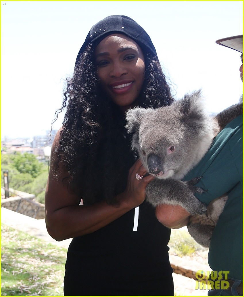 serena williams koala australia 013272223