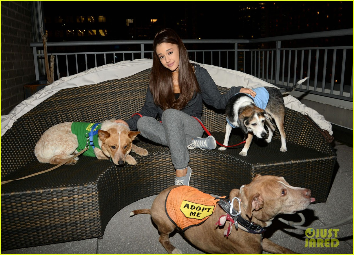 ariana grande is doing amazing things for nyc rescue dogs 103330363