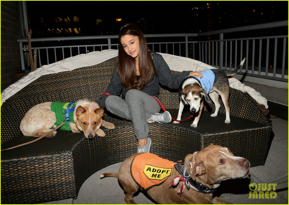 ariana grande is doing amazing things for nyc rescue dogs 113330364