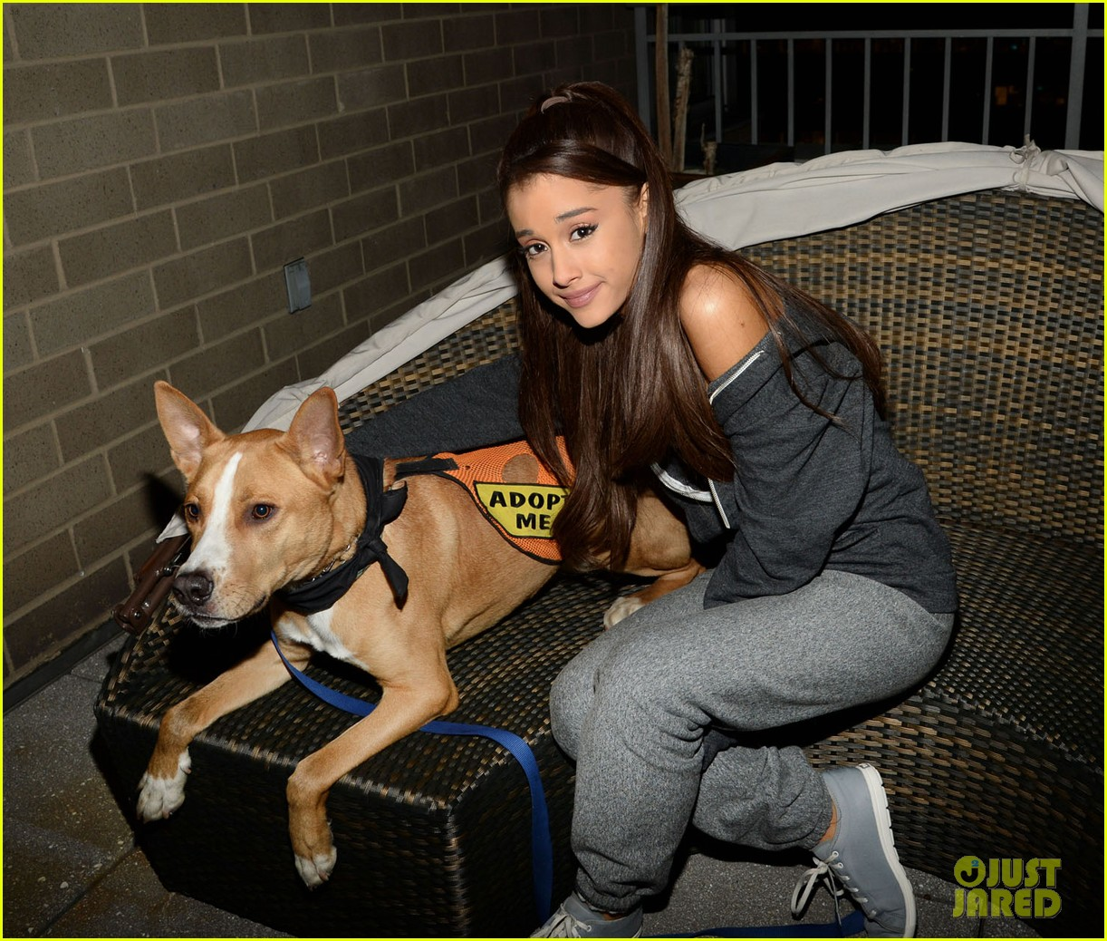ariana grande is doing amazing things for nyc rescue dogs 133330366
