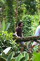 kit harington plays tourist in brazil rain forest 42