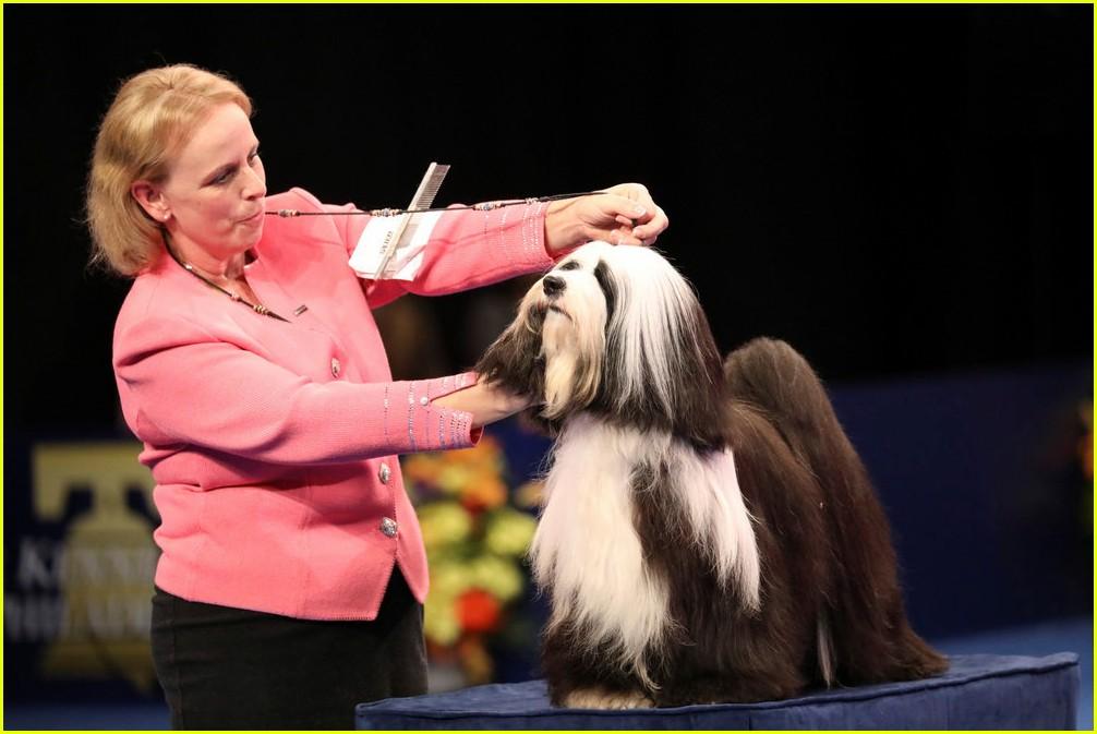 Who Won  National Dog Show