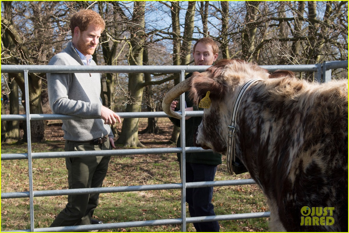 prince harry gets in touch with nature at epping forest 113874284
