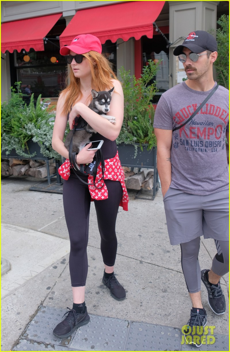 joe jonas and sophie turner adorably walk their new dog together 143952251