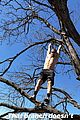 julianne hough climbs trees with shirtless hubby brother 02