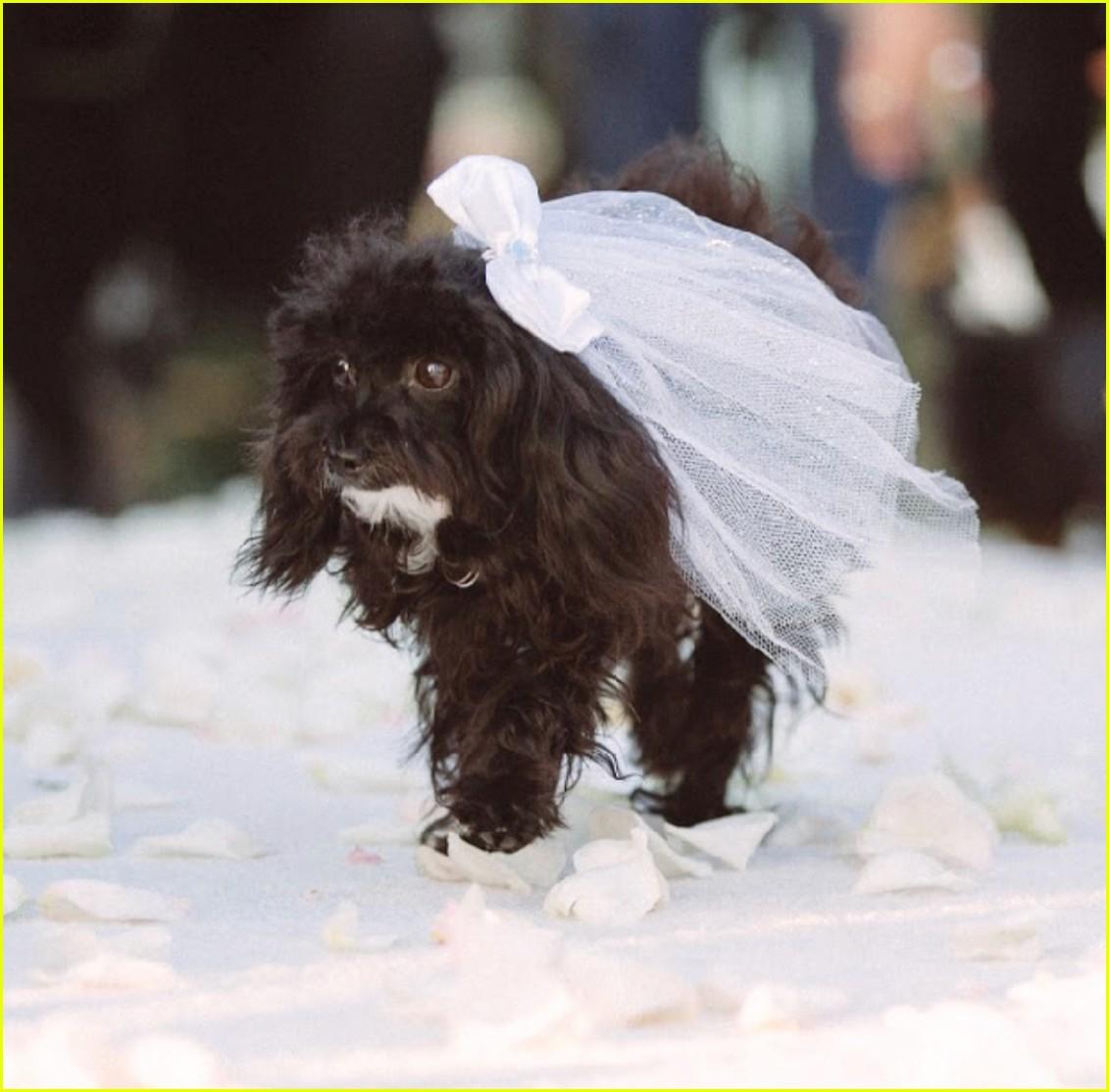 amy schumer wedding photos chris fischer 204039487