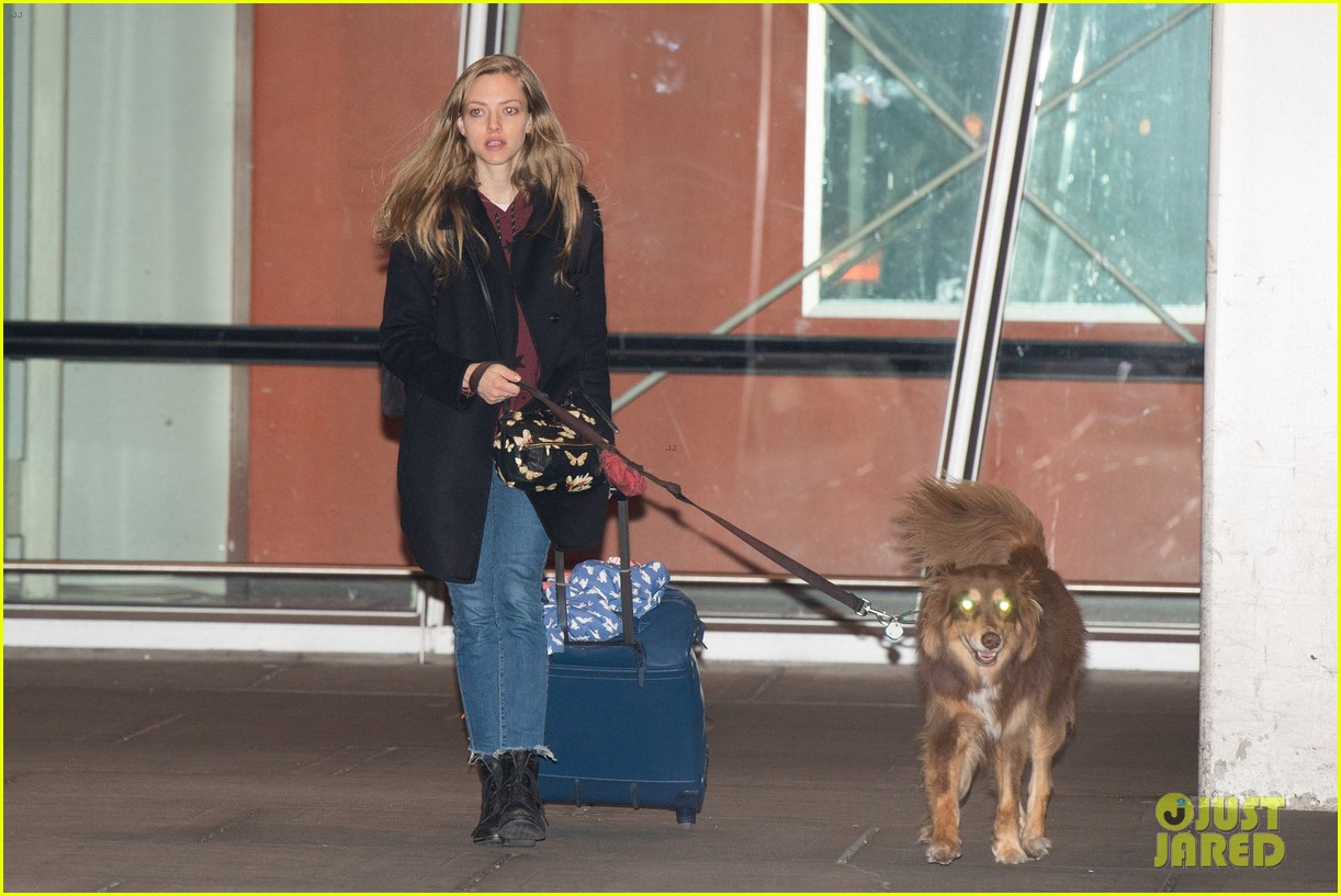 amanda seyfried travels from la to nyc with dog finn 05