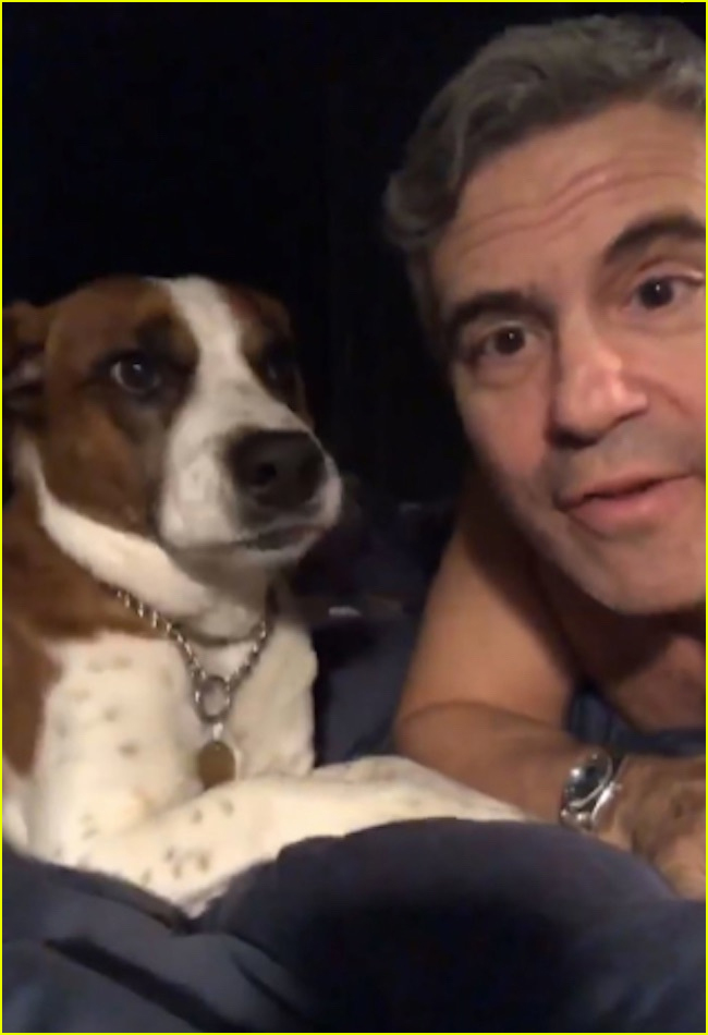 andy cohen fires back at critics after dog destroys sons toy 02