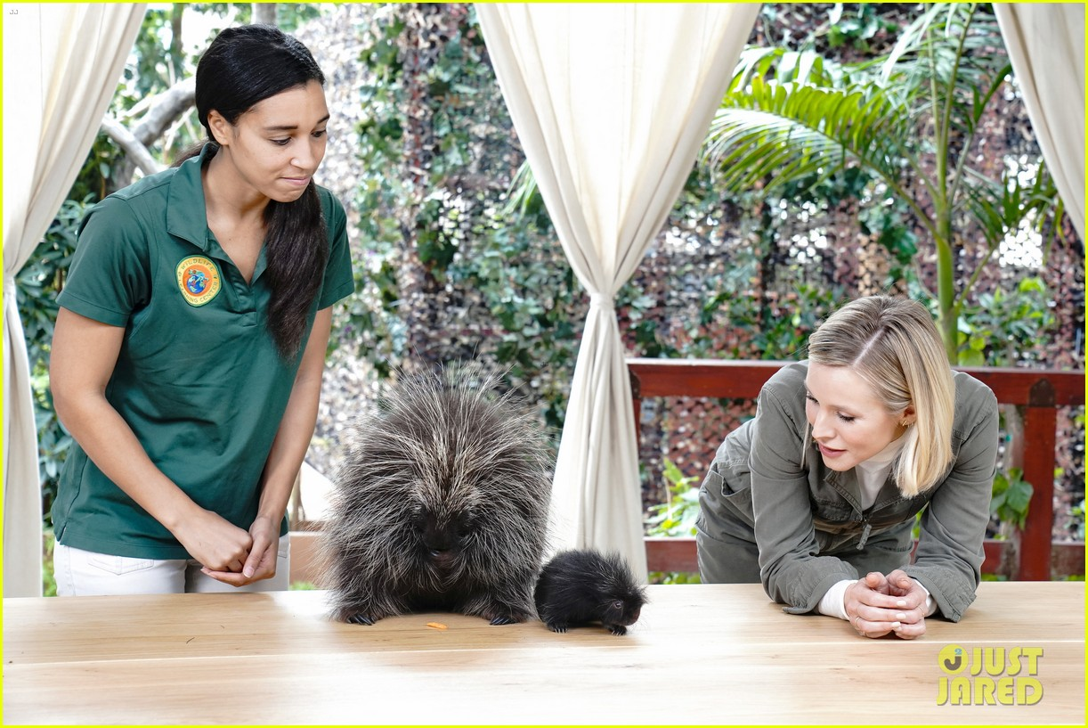 kristen bell reunites with a sloth on ellen series after her viral freak out 10