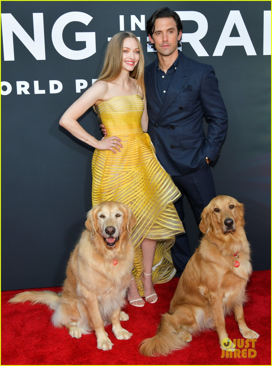 amanda seyfried milo ventimiglia art of racing in the rain premiere 014329843