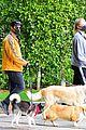 joe jonas sophie turner monday dog walk 65