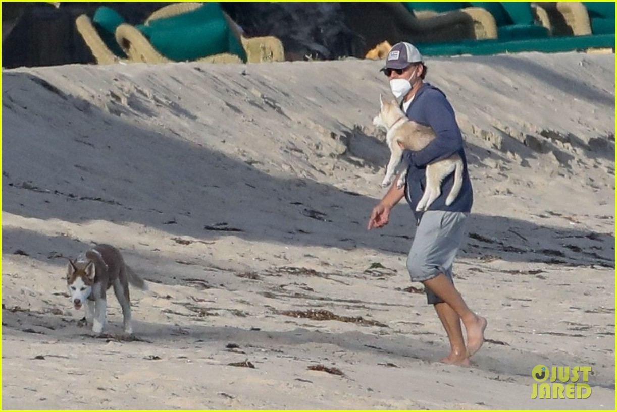 leo dicaprio jack jill huskies walk beach 064456085