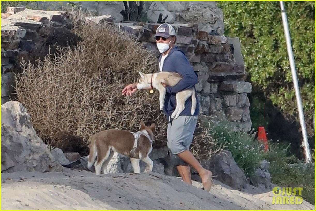 leo dicaprio jack jill huskies walk beach 144456093