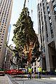 rockefeller christmas tree owl stowaway 09