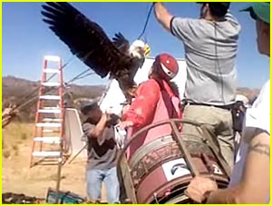 Rosie Gets Attacked by an Eagle
