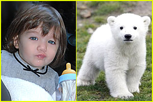 Suri Cruise to Voice Knut, The Polar Bear?