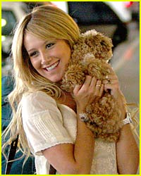Ashley Tisdale Has a Squishable Dog