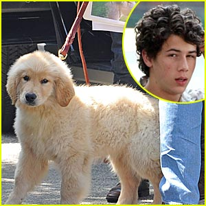 Nick Jonas: Elvis is a Dog!