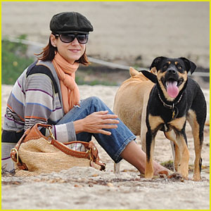 Kate Walsh: Pooch Playtime
