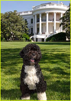 Bo Obama: First Dog Of The United States