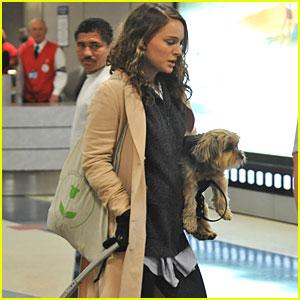 Natalie Portman: Airport Baby Bump!