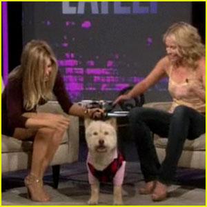 Jennifer Aniston Brings Norman on 'Chelsea Lately'