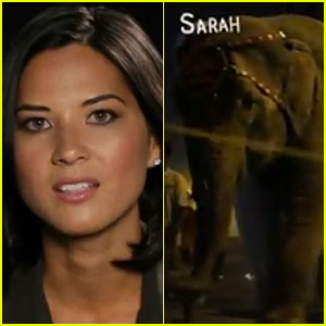 Olivia Munn's PETA Plea for Sarah the Elephant
