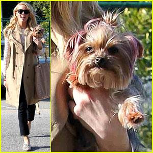 Amber Heard's Dog: Pink Ears!