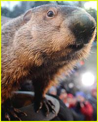 Punxsutawney Phil's Groundhog Day Prediction Revealed