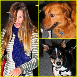 Hilary Swank: Frequent Flyer with Furry Friends!