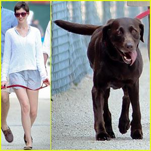 Anne Hathaway: New York City Dog Walker