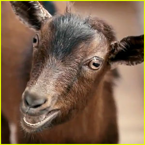 Doritos Super Bowl Commercial 2013: 'Goats 4 Sale' (Video)
