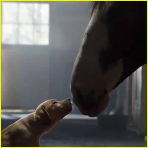 Budweiser 'Puppy Love' Super Bowl Commercial 2014 (Video)