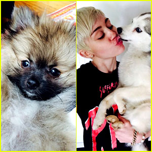 Miley Cyrus Gets Cute New Pup After Her Beloved Dog's Death