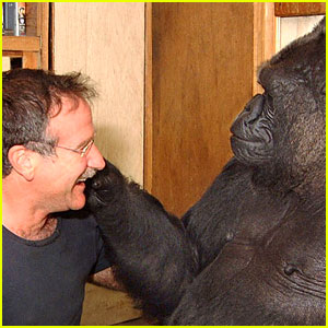 Koko the Gorilla's Tribute to Robin Williams is Incredibly Moving