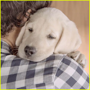 Budweiser's Puppy is Back for New Heartwarming Commerical