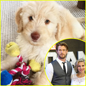 Chris Hemsworth Adopts the Most Adorable Dog Ever! (Photo)