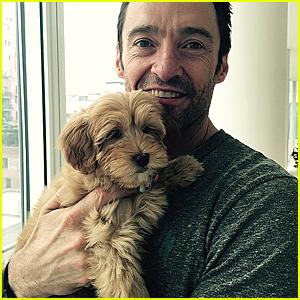 Hugh Jackman Cradles New Puppy & Makes Us Thankful For Christmas!