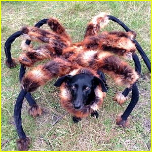 'Mutant Giant Spider Dog' is YouTube's Top Video of 2014!