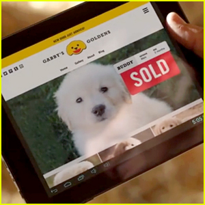 Go Daddy's Puppy Super Bowl Commercial Will Not Air