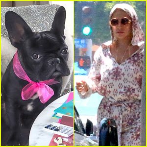 Lady Gaga Launches New Product Line - For Pets!