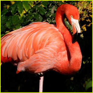 Busch Gardens Flamingo Euthanized After Violent Attack By Park Visitor