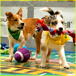 Puppy Bowl 2017: Meet the Dogs, Stream the Game, & More!